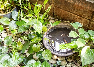 What are the Most Common Mosquito Breeding Sites?
